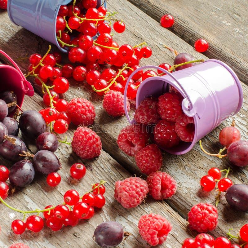 Säsongsbetonade mogna bär Skörda röda vinbär, hallon och gå royaltyfri bild