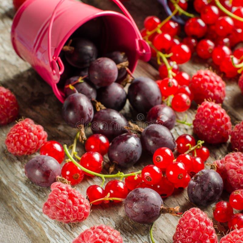 Säsongsbetonade mogna bär Skörda röda vinbär, hallon och gå arkivfoton