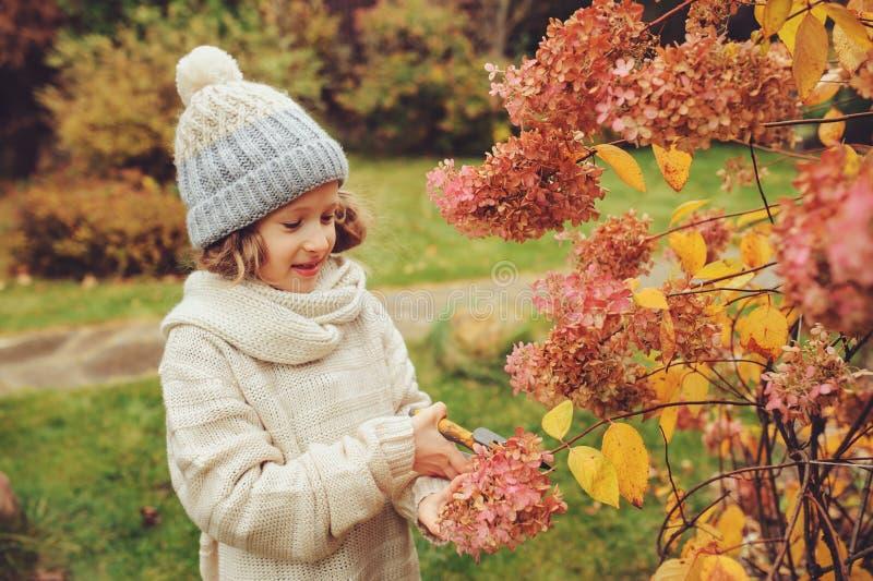 Säsongsbetonat trädgårds- arbete i sen höst, barnflicka hjälper att klippa vanlig hortensiabusken med pruner arkivfoto