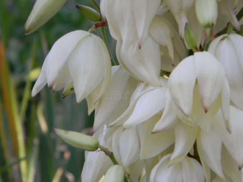 Sätta en klocka på blomman royaltyfri foto