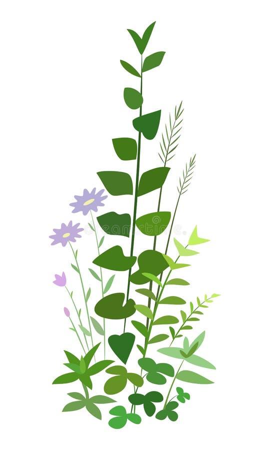 Sätta in gräs och blommor som isoleras på vit bakgrund stock illustrationer