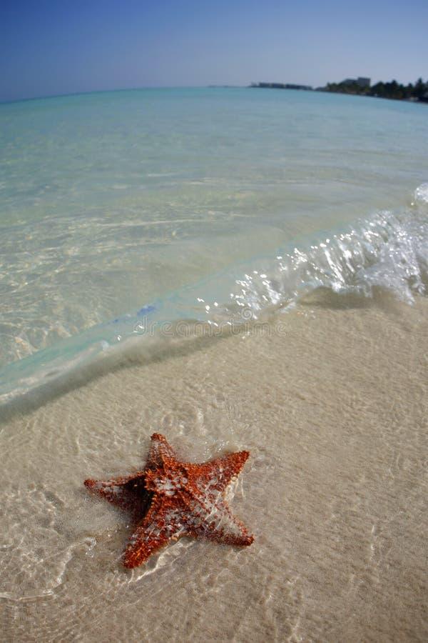 sätta på land den tropiska sjöstjärnan arkivbild