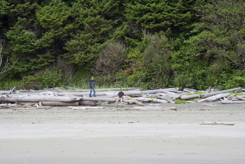 sätta på land den undersökande familjen för driftwood royaltyfria bilder
