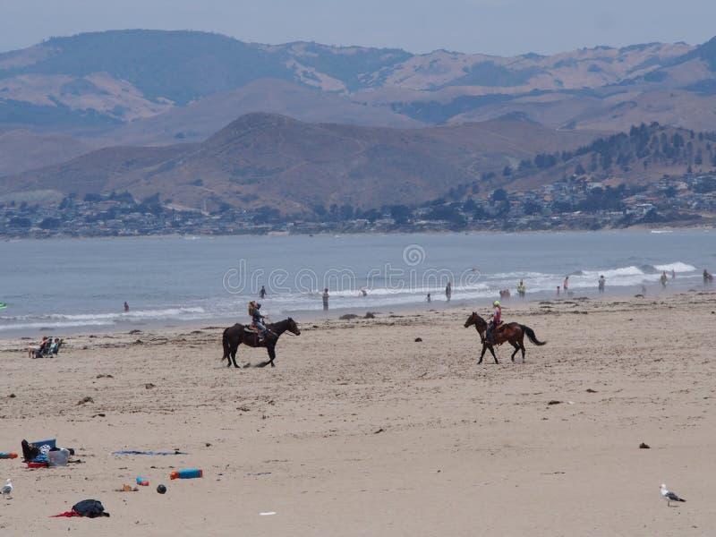 sätta på land hästridningen arkivfoto