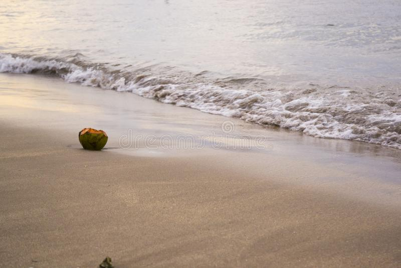 sätta på land kokosnöten arkivfoton