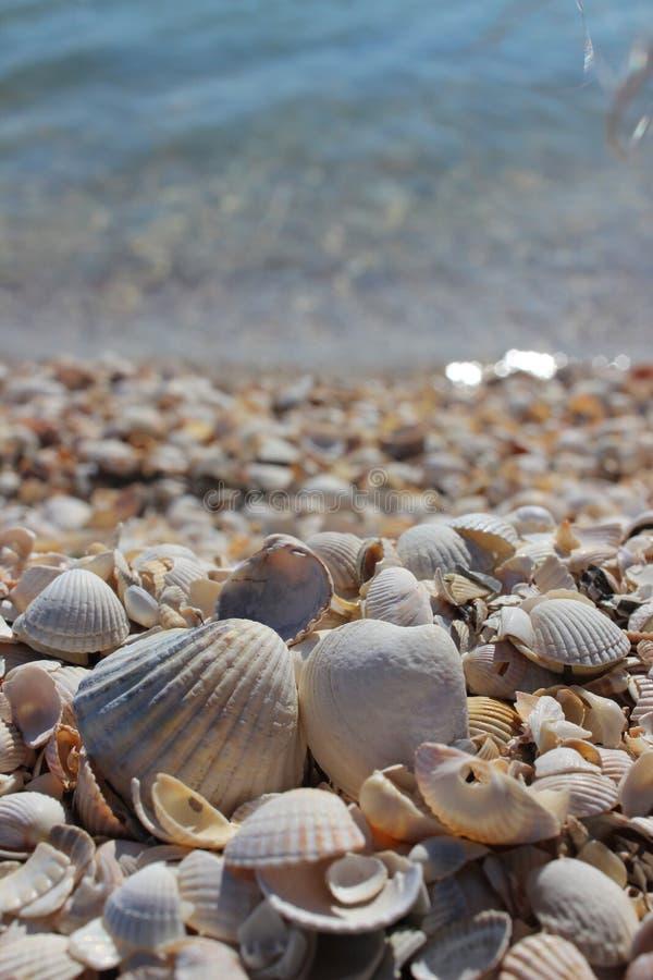 sätta på land kopieringslott som är utsmyckade över sandiga seafoamsnäckskal som seashoren space dem tre som tvättar sig arkivfoton