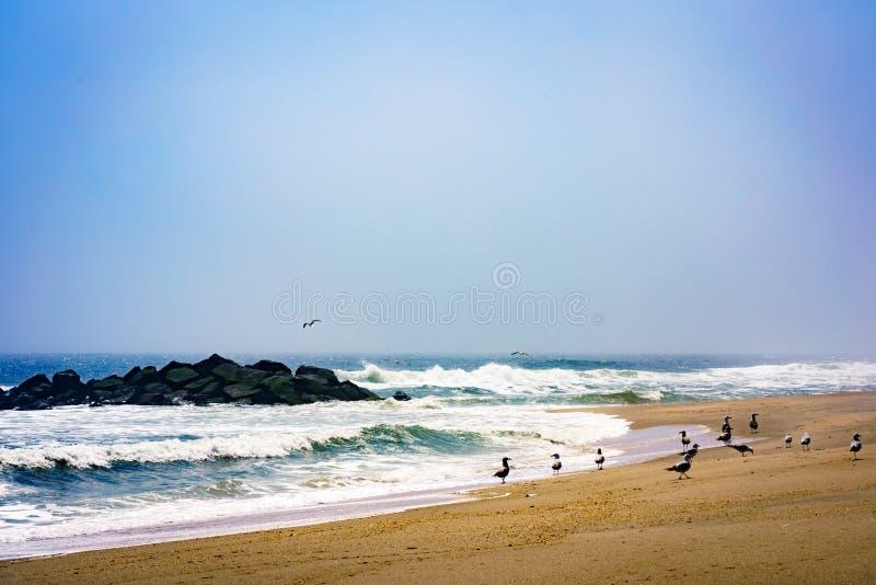 Sätta på land med seaguls och surfa i morgondimman arkivfoton