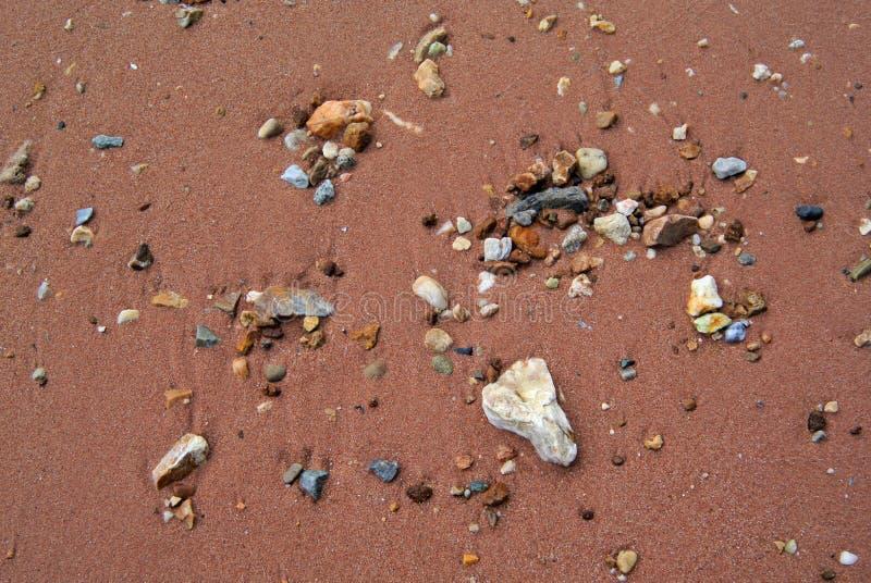 Sätta på land tätt upp bakgrund, stenen och snäckskal på sand royaltyfri fotografi