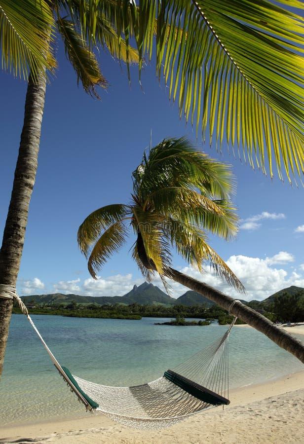 sätta på land tropiskt fotografering för bildbyråer