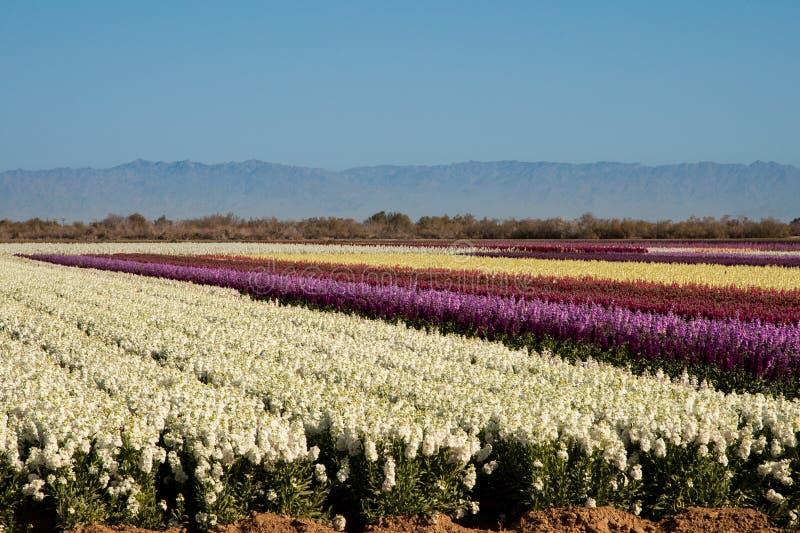 Sätter in av lagerför blommor royaltyfria bilder