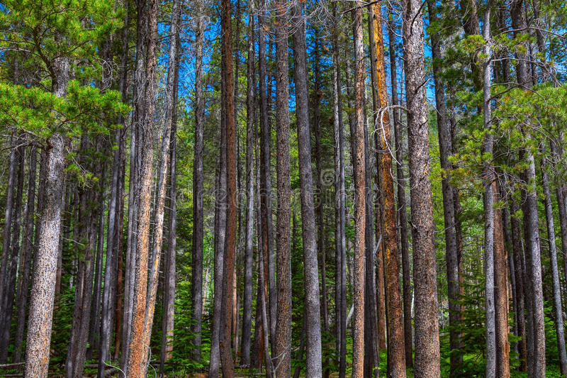 Säulen der Natur stockfoto