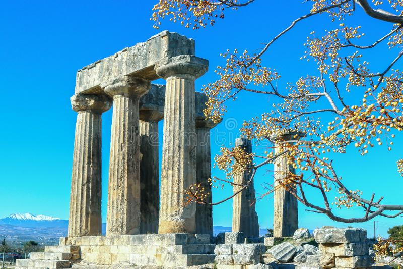 Säulen des Tempels von Apollo in altem Korinth Griechenland, das durch Chinaberries auf Niederlassungen gegen blauen Himmel mit S lizenzfreie stockfotos