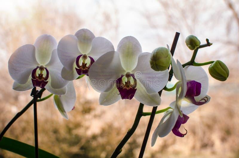 słodki kwiat obraz royalty free