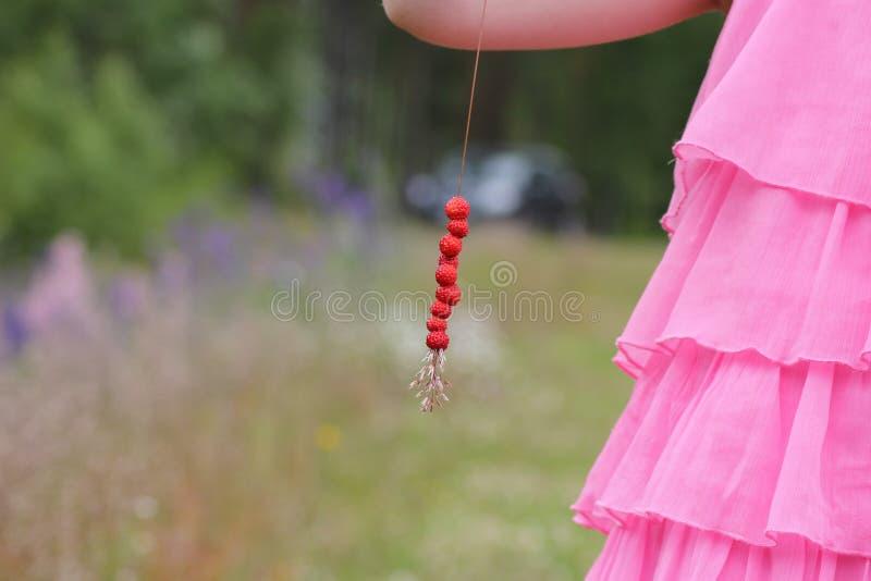 Słoma z dzikimi truskawkami zdjęcie royalty free