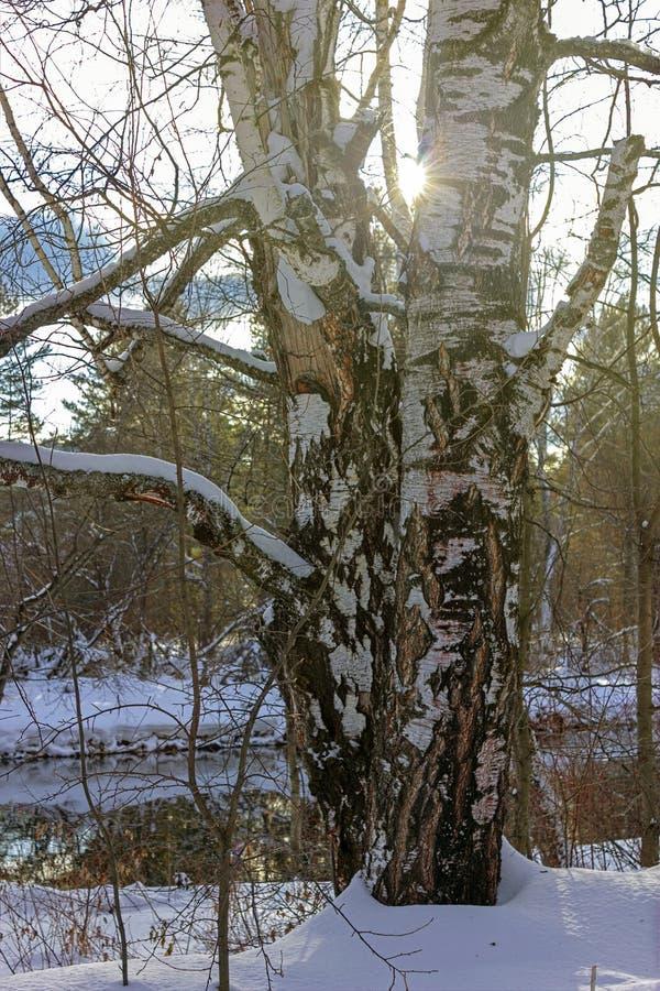 słoneczny dzień w śnieżnej zimy lasowej iso fotografii zdjęcie stock