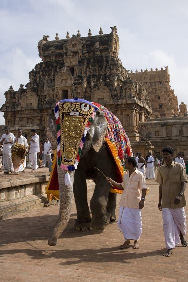 słonia ind świątyni thanjavur obraz royalty free