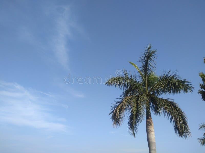 så trevliga siktsblickar för blå himmel arkivfoton