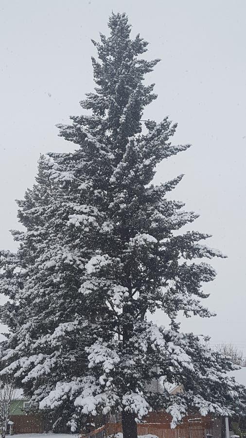 Så vit snö royaltyfri fotografi