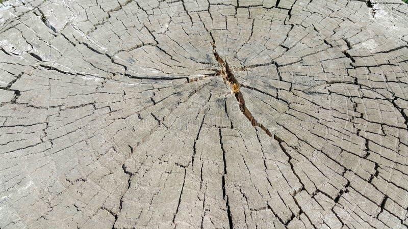 Sågat runt trä som knäckas från torrhet, bra textur royaltyfri foto