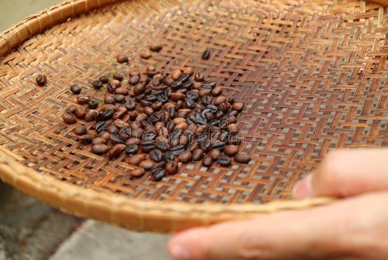 Sålla mörka grillade kaffebönor med att tröska korgen för framställning av kaffe hemma royaltyfri foto