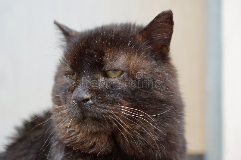 Sårad katt i behov av behandling fotografering för bildbyråer