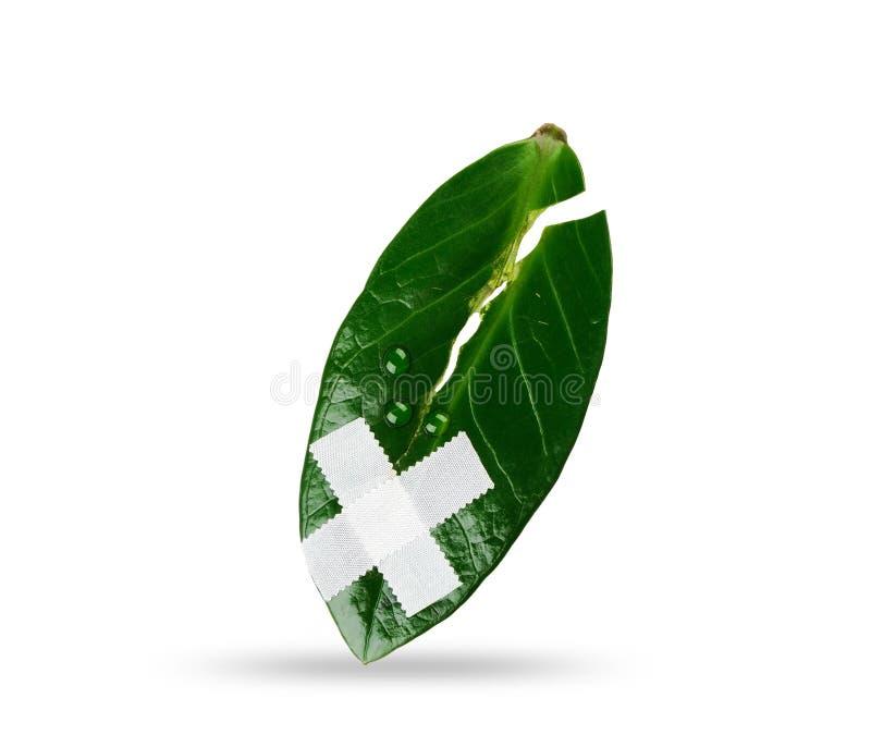 Såradt och lida leafen royaltyfri foto