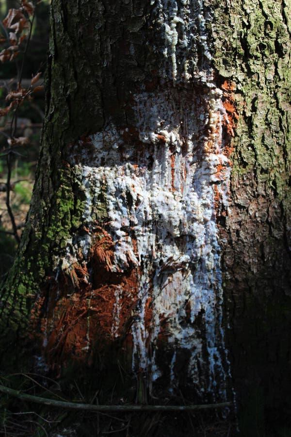 Sårat träd med vit målarfärg royaltyfri foto