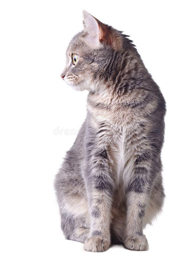 Séance de chat photo stock