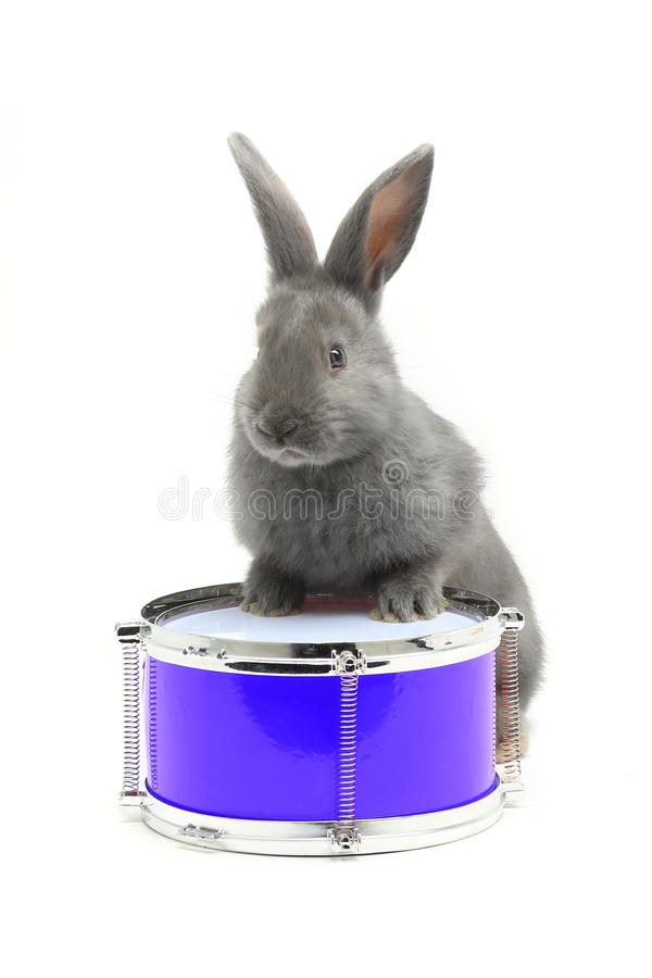 Download Séance de lapin image stock. Image du musical, tambour - 56487963