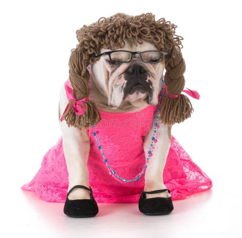 séance femelle de chien images stock