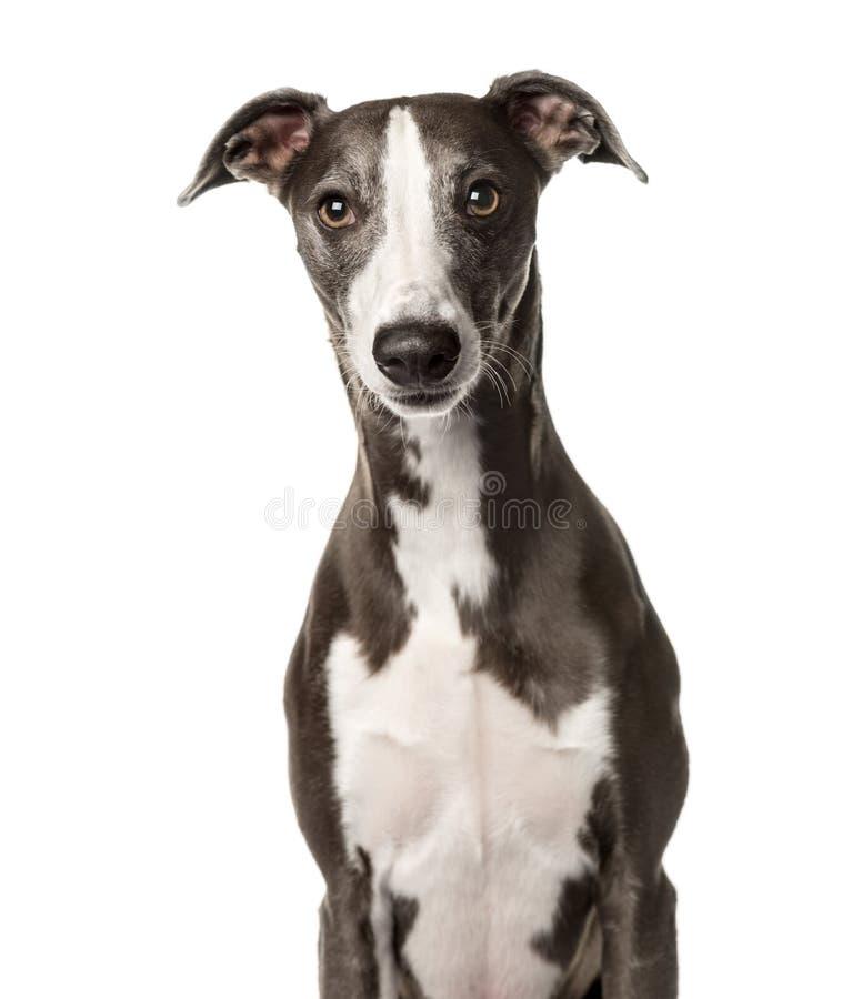 Séance instantanée de chien, photo stock