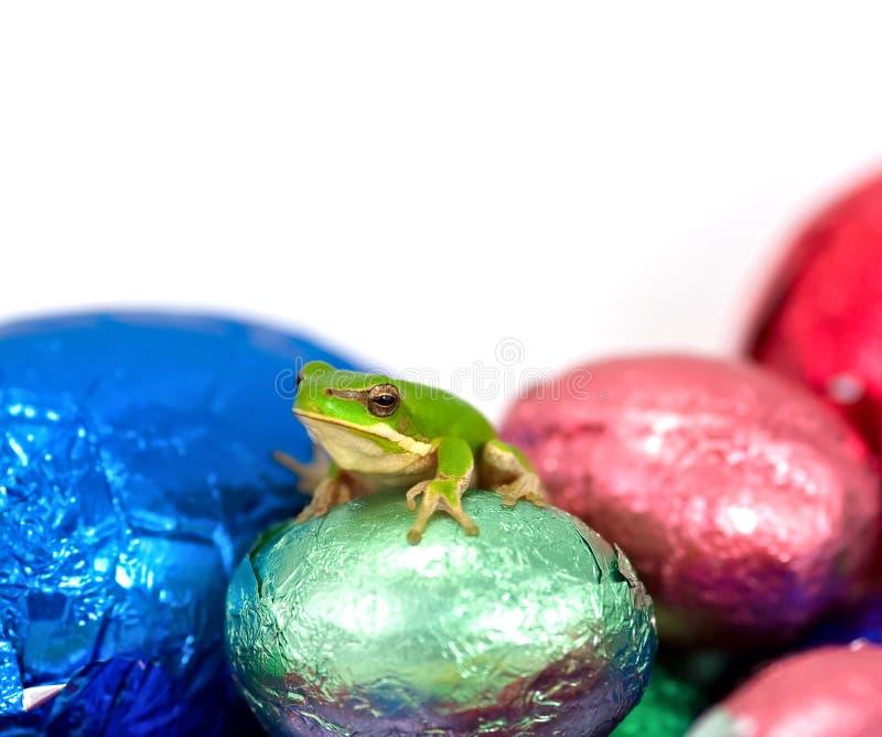 Séance verte naine de grenouille d'arbre photos libres de droits