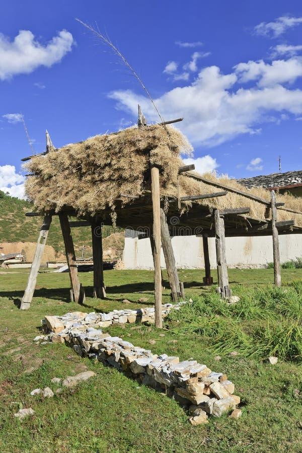 Séchage d'orge sur le support en bois à la ferme tibétaine dans la campagne, Zhongdian, Chine photographie stock libre de droits