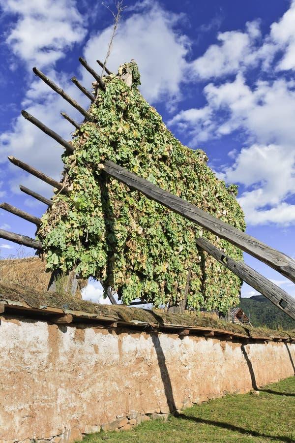 Séchage d'orge sur le support en bois à la ferme tibétaine dans la campagne, Zhongdian, Chine photo stock