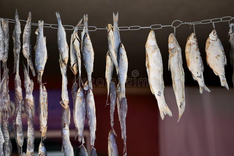 Séchage de petits, salés poissons sur une corde photo libre de droits