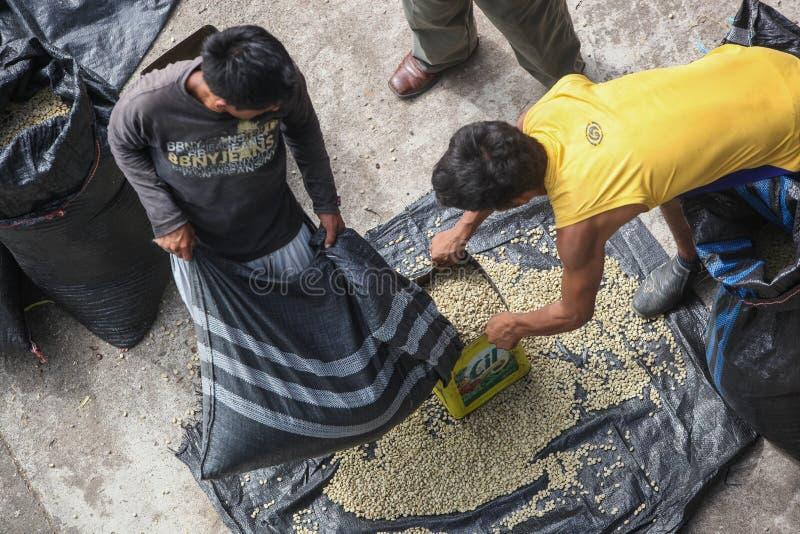 Séchage des grains de café photos libres de droits