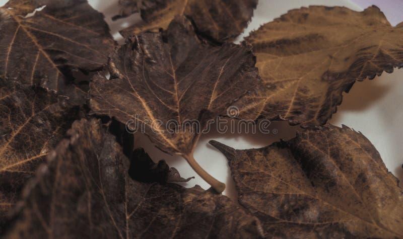 Séchez les feuilles image libre de droits
