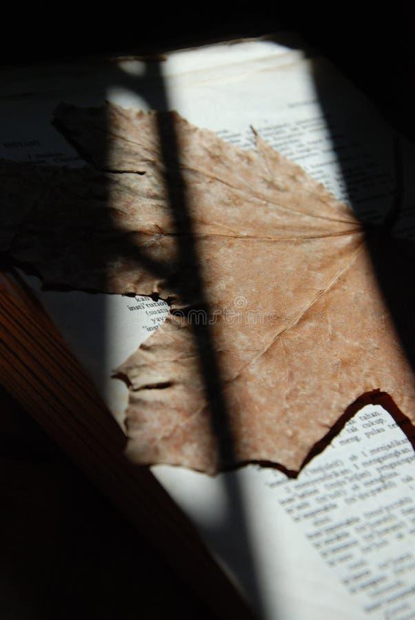 Séchez les feuilles photographie stock libre de droits