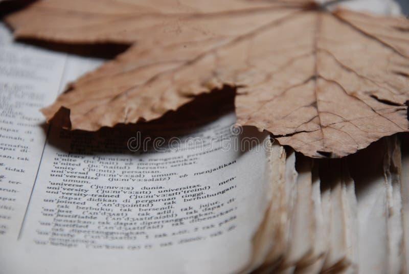 Séchez les feuilles photo libre de droits