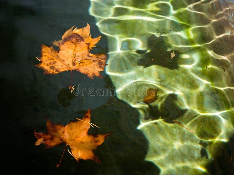 Séchez les feuilles au-dessus de l'eau photo stock