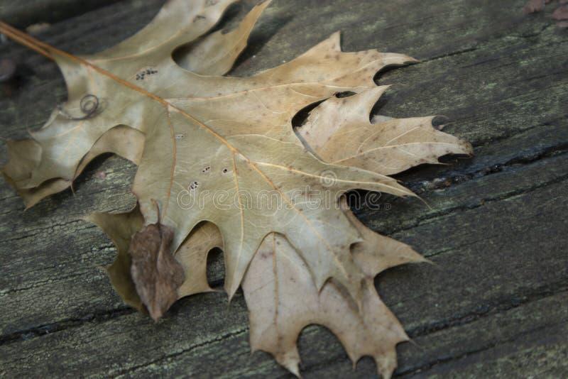 Séchez les feuilles au soleil images libres de droits