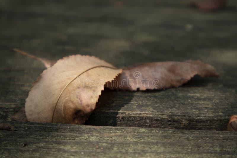 Séchez les feuilles au soleil photo libre de droits