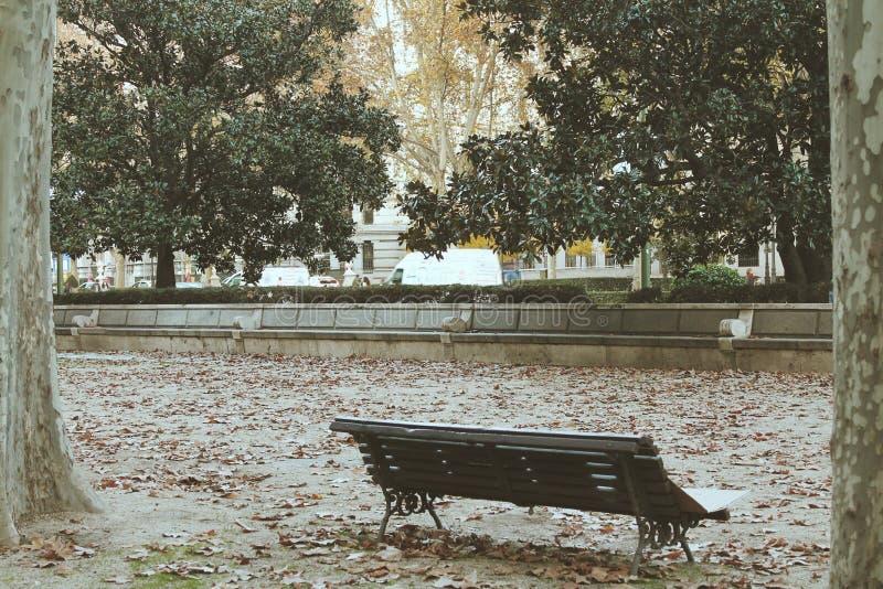Séchez les feuilles sur un banc photo stock