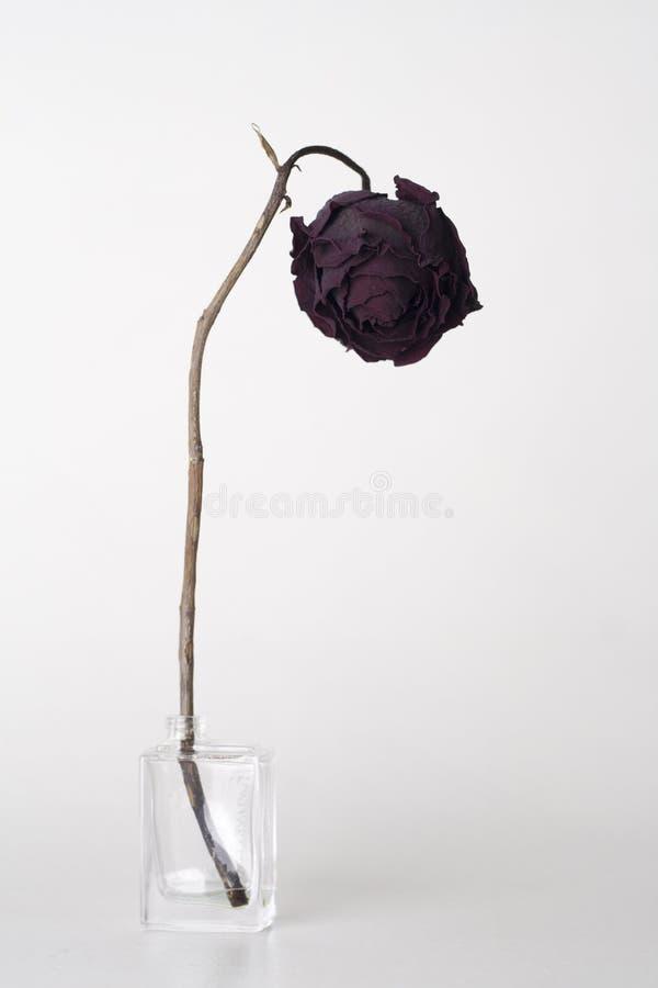 Séchez rose photographie stock