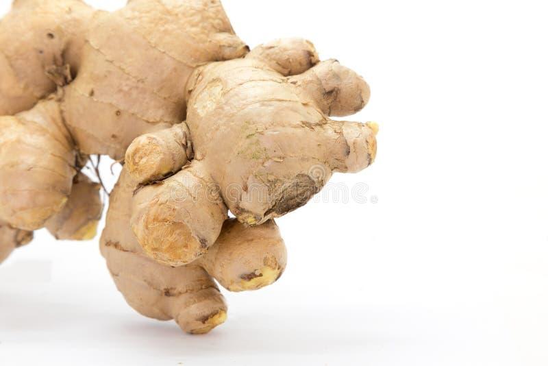 Sélectif frais de gingembre focalisé photo stock