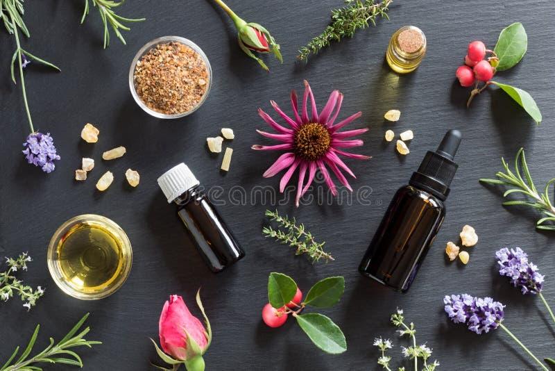 Sélection d'huiles essentielles et d'herbes sur un fond foncé photographie stock libre de droits