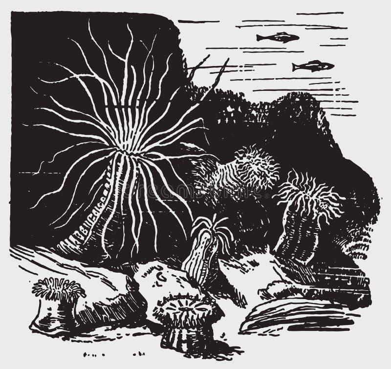 Sélection de différentes actinies au fond de la mer illustration stock