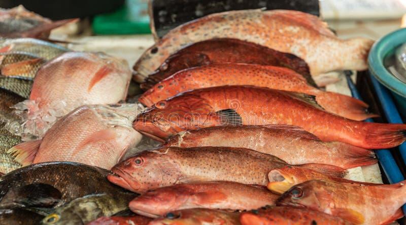 Sélection de poissons rouges à Endeqal Seafood, Balabag, Boracay, Philippines photos libres de droits