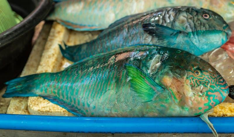 Sélection de poissons verts à Endeqal Seafood, Balabag, Boracay, Philippines images libres de droits