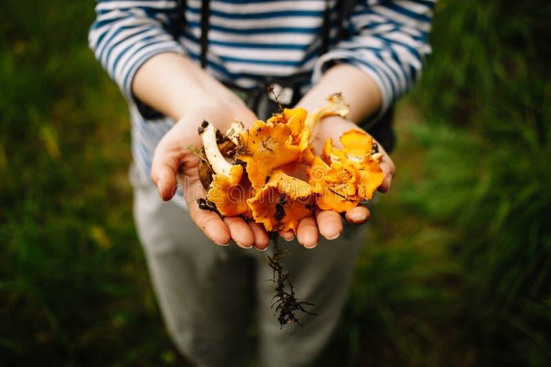 Sélection des champignons et des canneberges dans la forêt pendant l'été ou l'automne tôt Jours d'été Les champignons et les baie photographie stock libre de droits